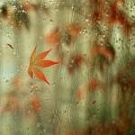 ~ Rain Rain Go Away ~