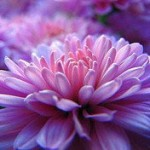 ~ Pretty Pink Post ~