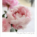 Pink Peonies – The Start of Summer