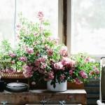 Windowsills and Flowers